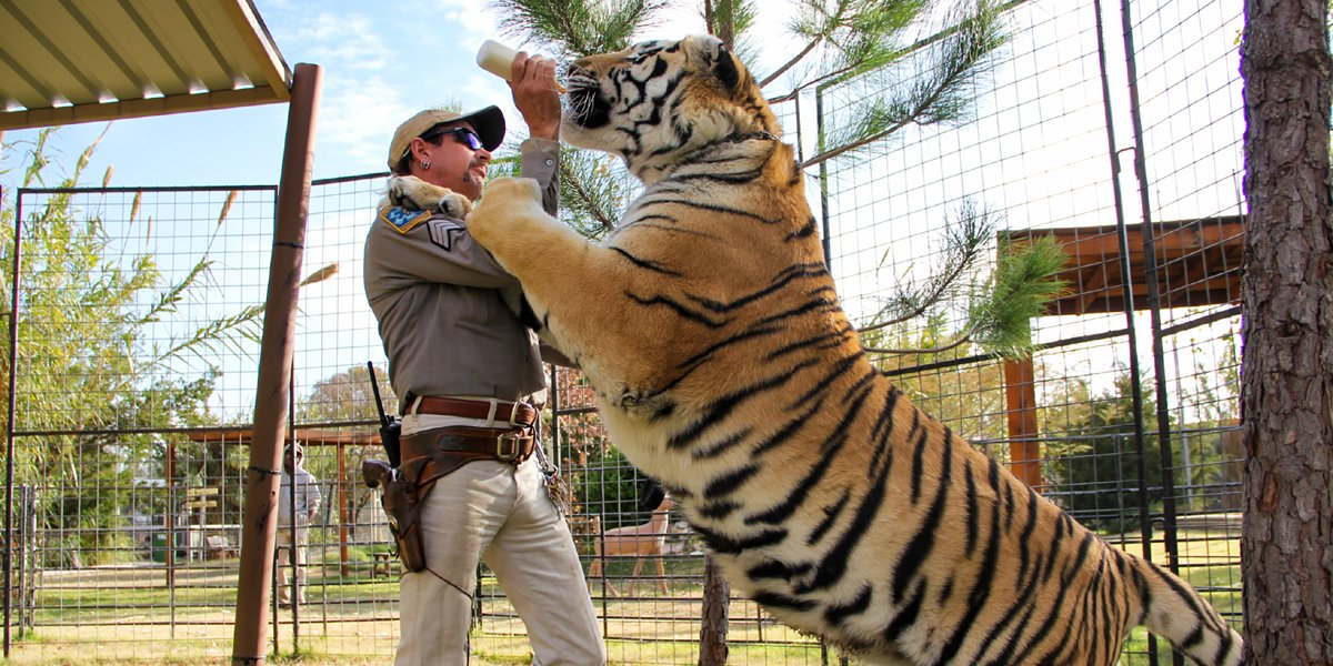 Joe Exotic feeding a tiger in Tiger King