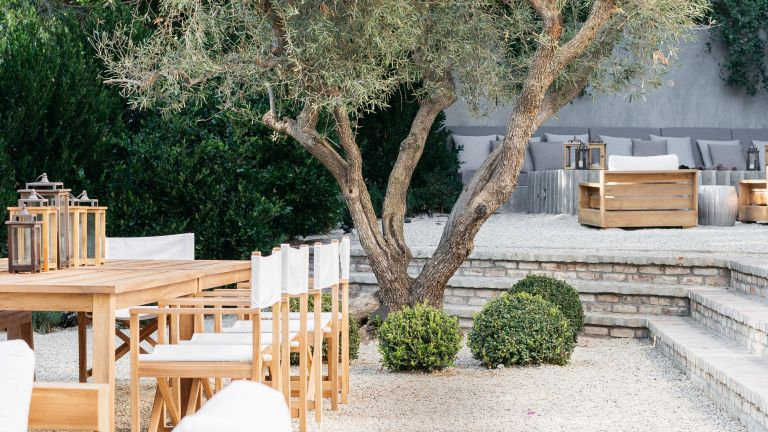 Calm garden retreat with olive tree