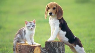 breeds of dogs that are good with cats