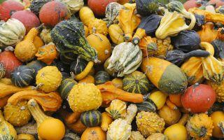 squash, gourds