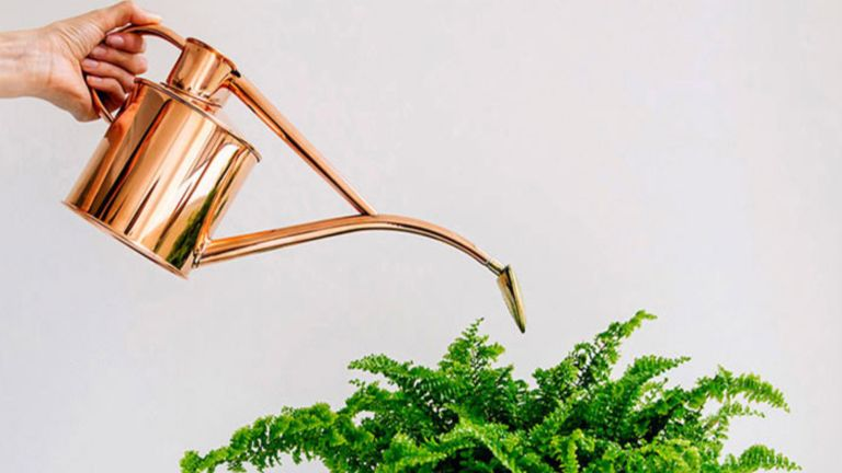 plant gifts: Haws copper indoor watering can