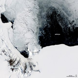 polynya, antarctic coast