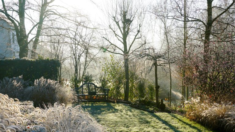 winter garden covered in frost
