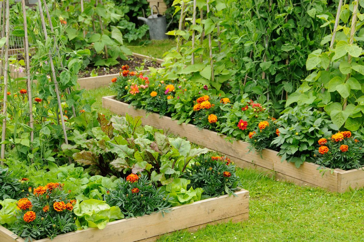 Your ultimate guide to the gardening movement of the moment