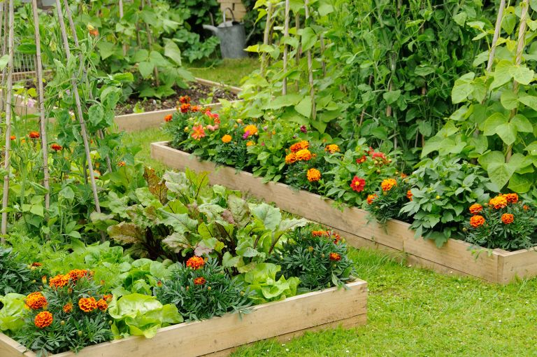 no dig gardening raised bed for flowers and vegetables