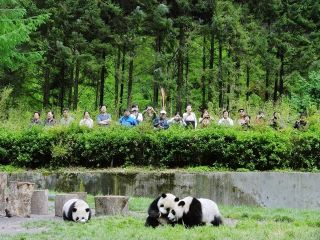 Research shows nature tourism isn't an automatic ticket out of poverty for people who transition from farming to tourism for economic improvement. Here, tourists watch pandas at China's Conservation and Research Center for the Giant Panda (CCRCGP) in Wolo