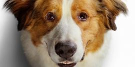 How A Dog's Journey's Opening Box Office Compares To A Dog's Purpose