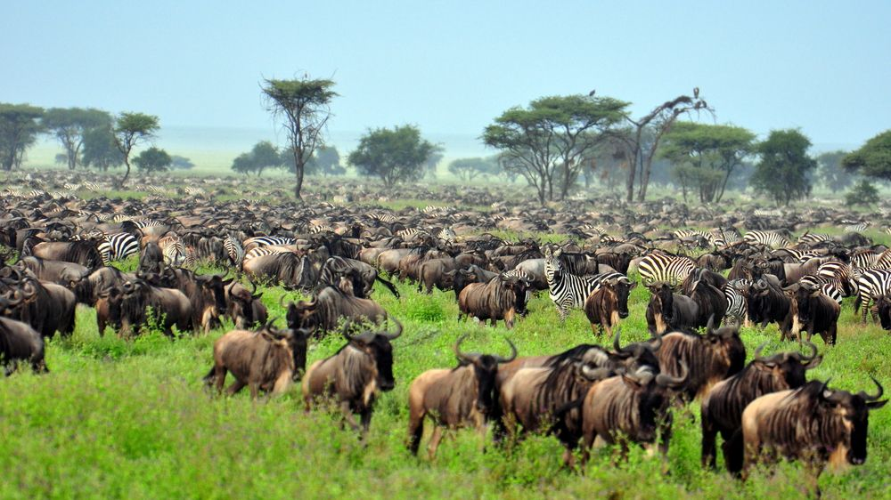 The Serengeti: Plain Facts about National Park & Animals   Live Science