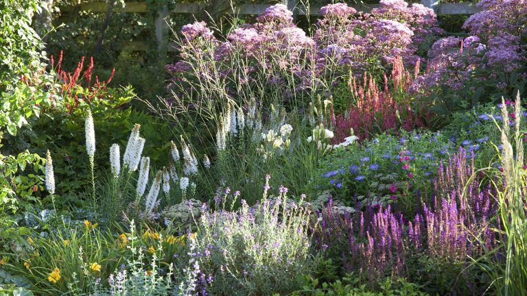 Monty Don tips for dividing perennials