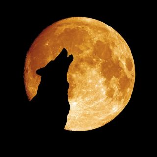 A wolf howls in front of the moon.