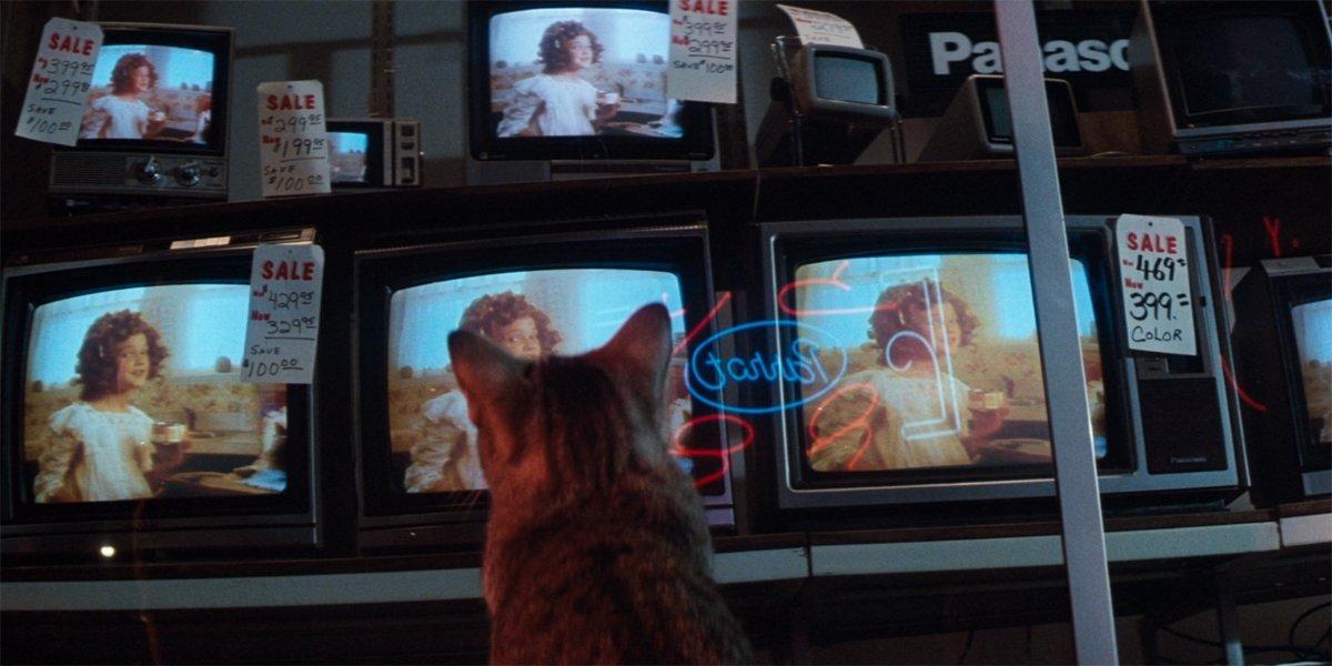 Cat's Eye cat watching Drew Barrymore on TV