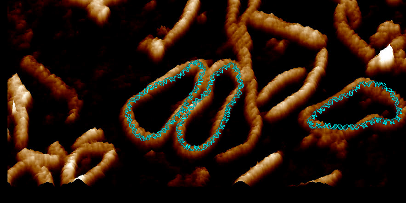 Incredibly detailed video shows DNA twisting into weird shapes to squeeze into cells