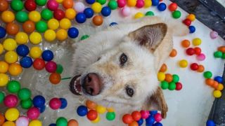 Dogworld dog water park