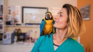 parrot for a pet