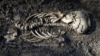 This close-up shot shows one of the burials found in the tombs in Sweden. They are believed to be Christianized Vikings who lived about 1,000 years ago.