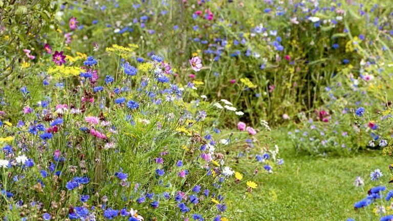 rewilding your garden