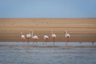 Flamingos on a beach in Namibia.