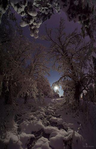 Moon Shines over Snowy Woods in Sweden Heden