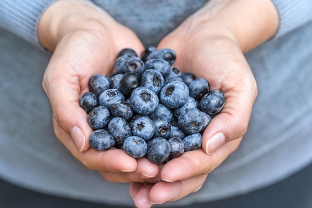 Here's how to grow blueberries