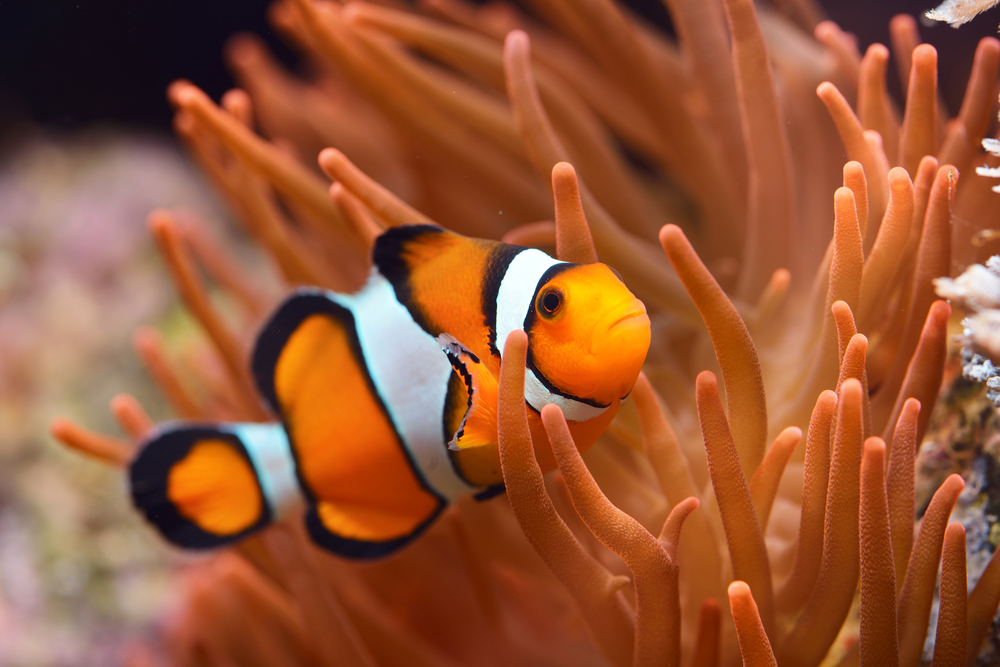 Facts About Clownfish | Live Science