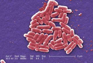 e. coli, cdc, bacteria