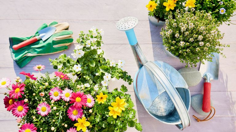 watering can with flowers and gardening gloves