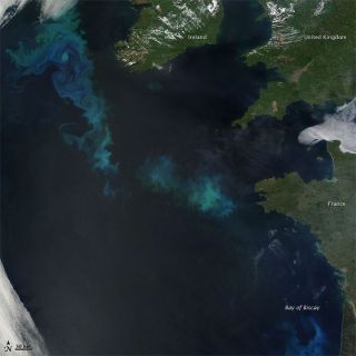 A phytoplankton bloom in the North Atlantic.