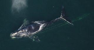 tangled-whale-fullb-11103-02