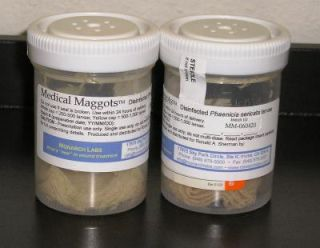 Maggot Therapy Gains in Popularity | Live Science