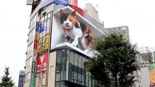 3d cat shinjuku
