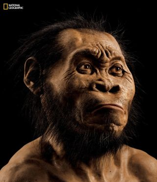 recreation of the head of Homo naledi by paleoartist