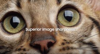 Cat With Diamond Eyes