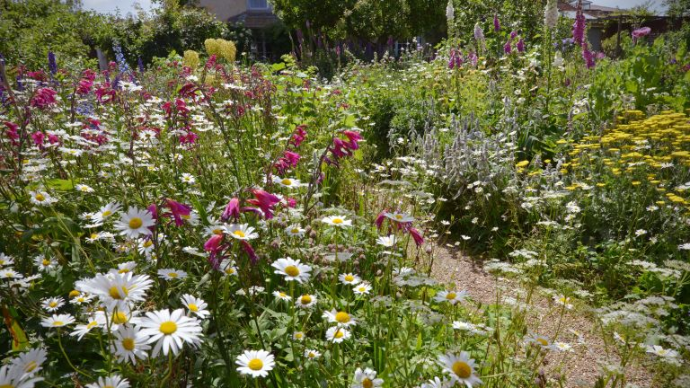 Cottage gardens with flowerbeds packed with flowers in full bloom
