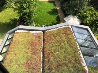 a green roof on an extension to a london home