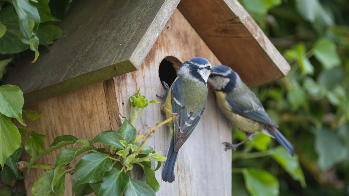 The garden guru reveals his top birdhouse ideas and expert tips