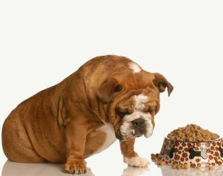 dogs, pets, safety of pet foods