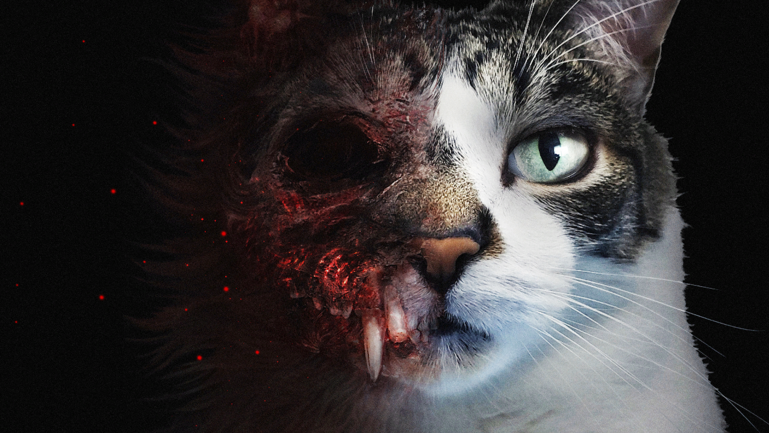 In this new horror game you are a cat, and your name is Biscuit