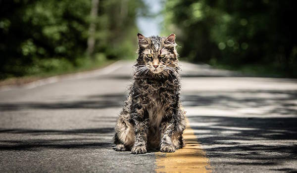 Creepy cat in Pet Sematary