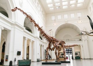 Máximo is a titanosaur called <em>Patagotitan mayorum</em>, the largest dinosaur ever discovered.