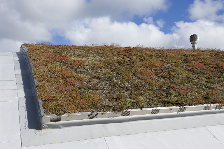 Green roofing system with sedum