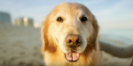 The Super Bowl's Most Heartwarming Ad Is About Dog Cancer, So Grab Your Tissues