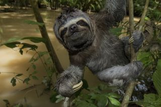 sloth-amazon-vr-film