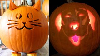 cat and dog pumpkin carving ideas