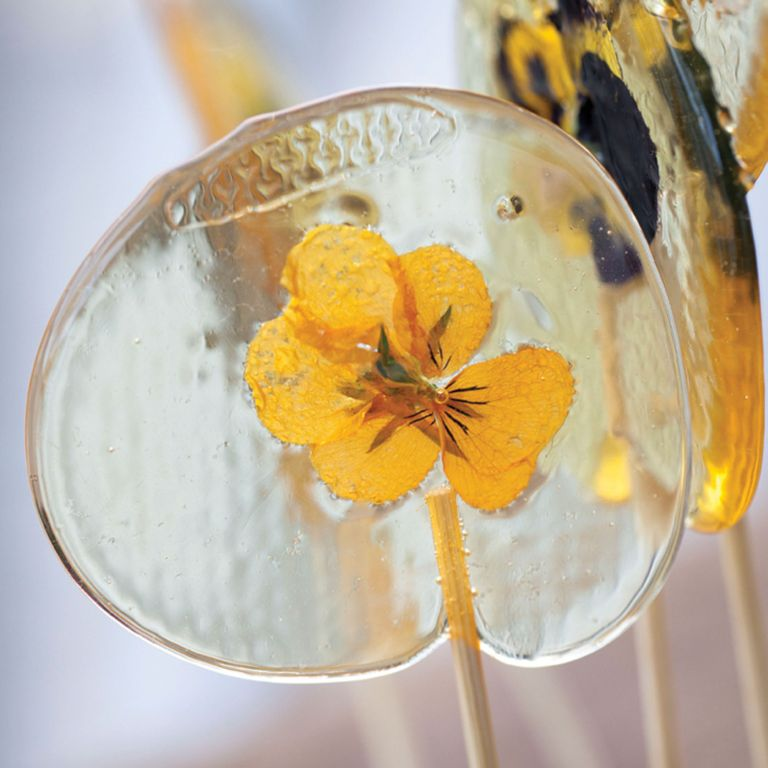 pansy pop lolly photo