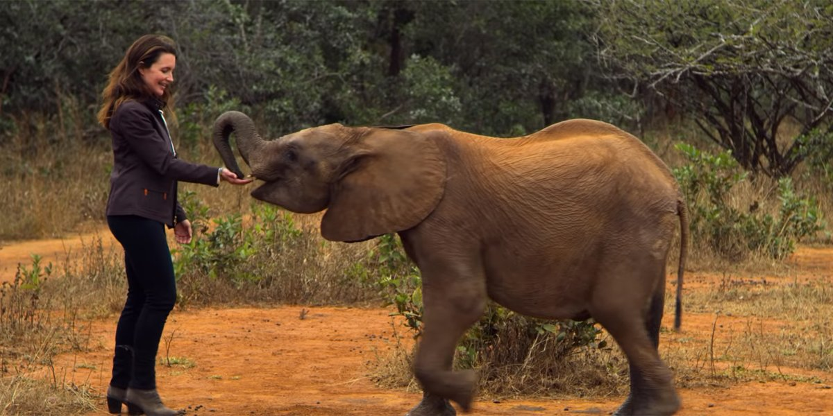 Where Did Netflix's Holiday In The Wild Film The Real Elephants?