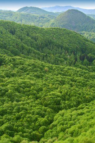 Forested landscape