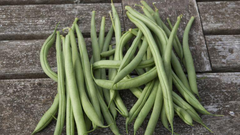 Cobra climbing French beans harvest