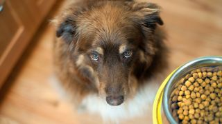Does dog food expire?