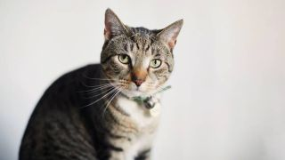 best flea collars for cats
