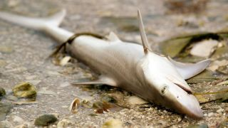 Grooveshark is dead